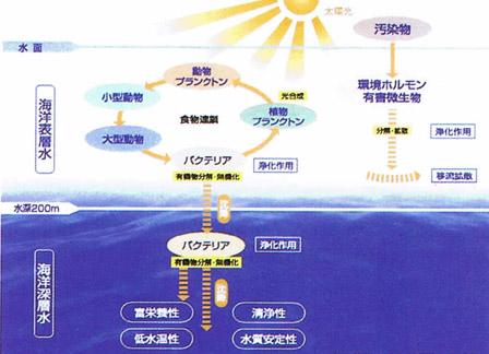 海洋深層水の生成過程の模式図